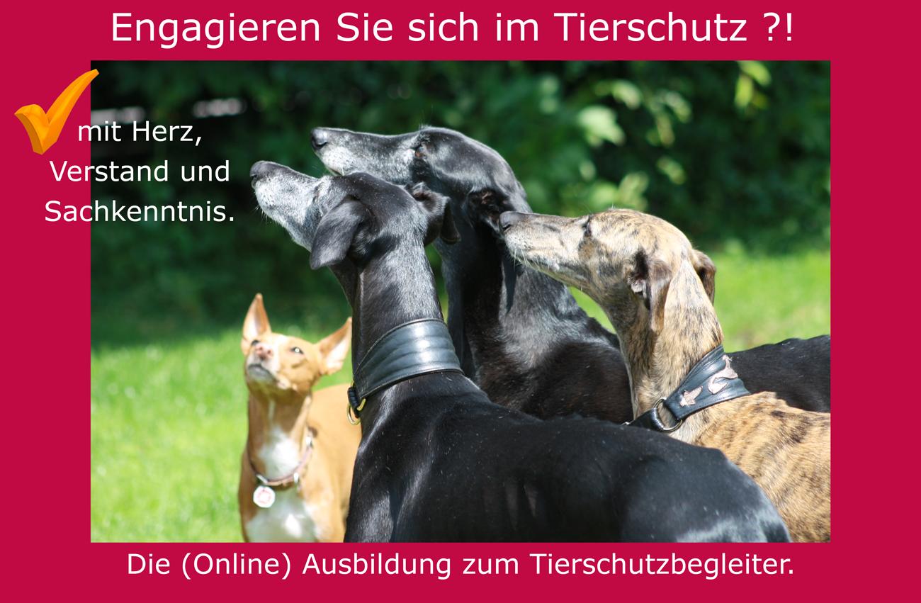 Infowebinar zur Ausbildung Tierschutzbegleiter.